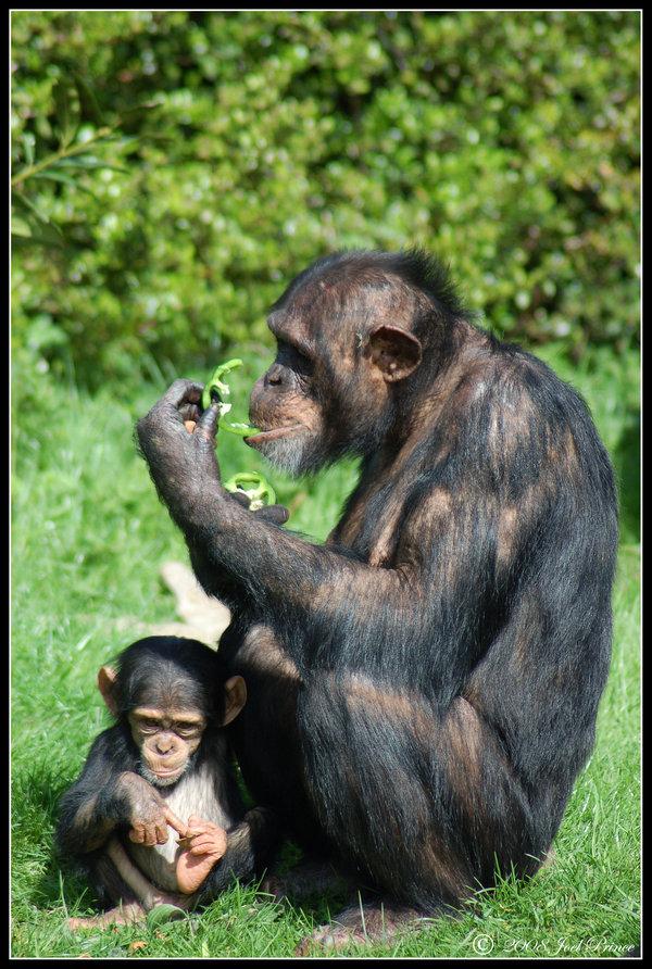 24 Adorable Baby Animal Photographs