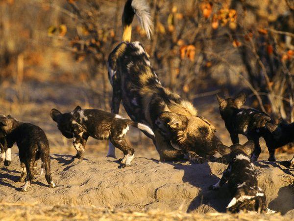 kasih sayang, kasih sayang hewan, hewan setia, hewan sayang