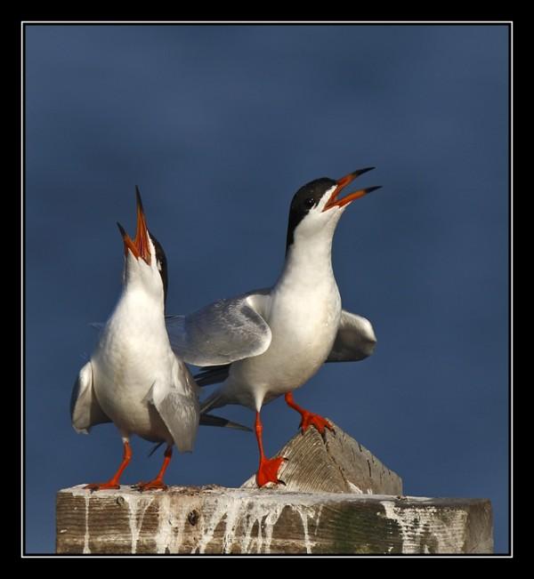 Examples of birds