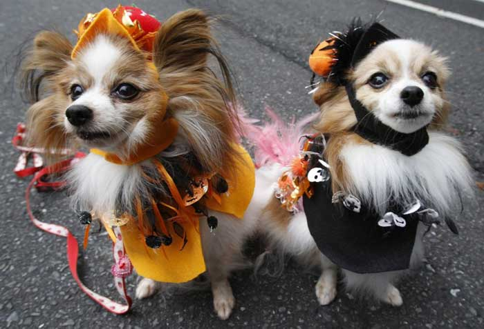 fashionable-dogs