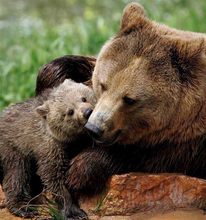 33 Heart Touching Pictures Of Animals With Moms