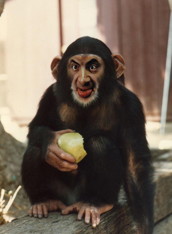 Animal Photo Manipulations manipulated monkey