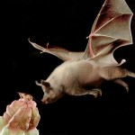 40 Extremely Weird Animal Photo Manipulations