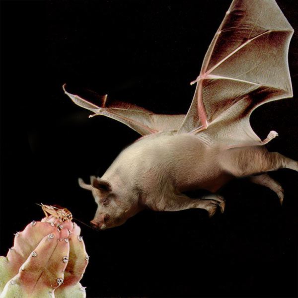 Honduran white bat wings