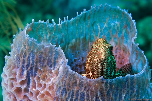 Wonderful Underwater Photography by Mike Roberts