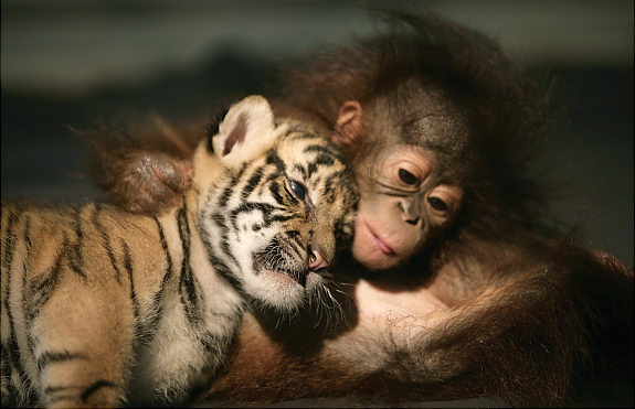Oddest Animal Couples 02