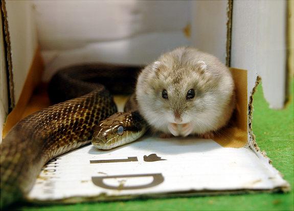 Oddest Animal Couples 03