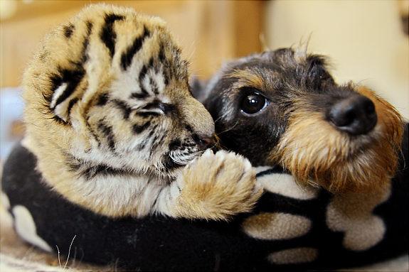 Oddest Animal Couples 05