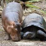 33 Oddest Animal Couples