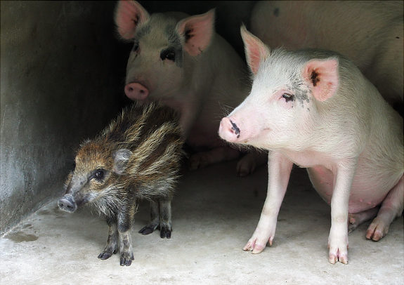 Oddest-Animal-Couples-17.jpg