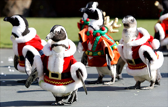 March of the Christmas Penguins-01