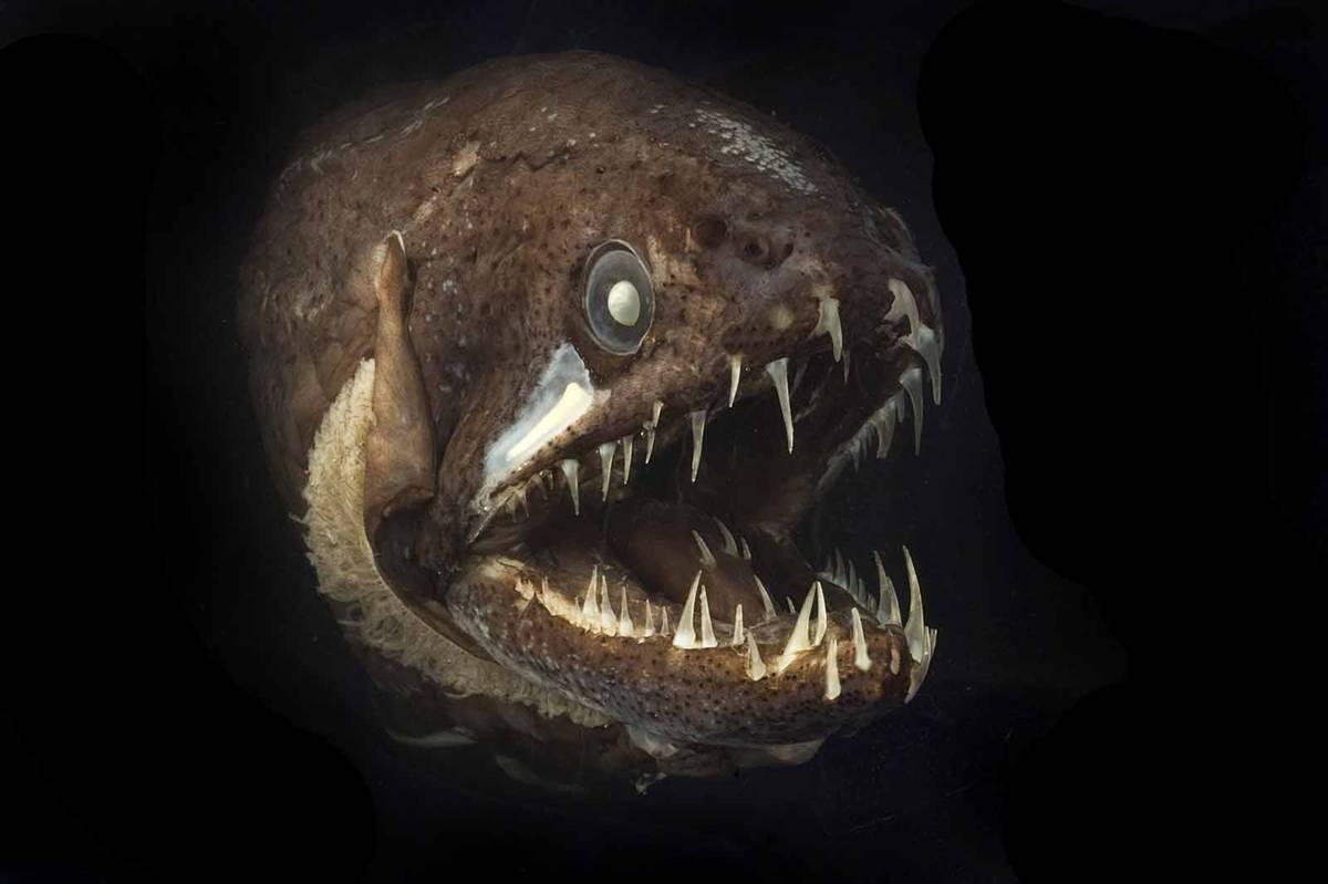 15 bizarre creatures under the sea oneclickwonders