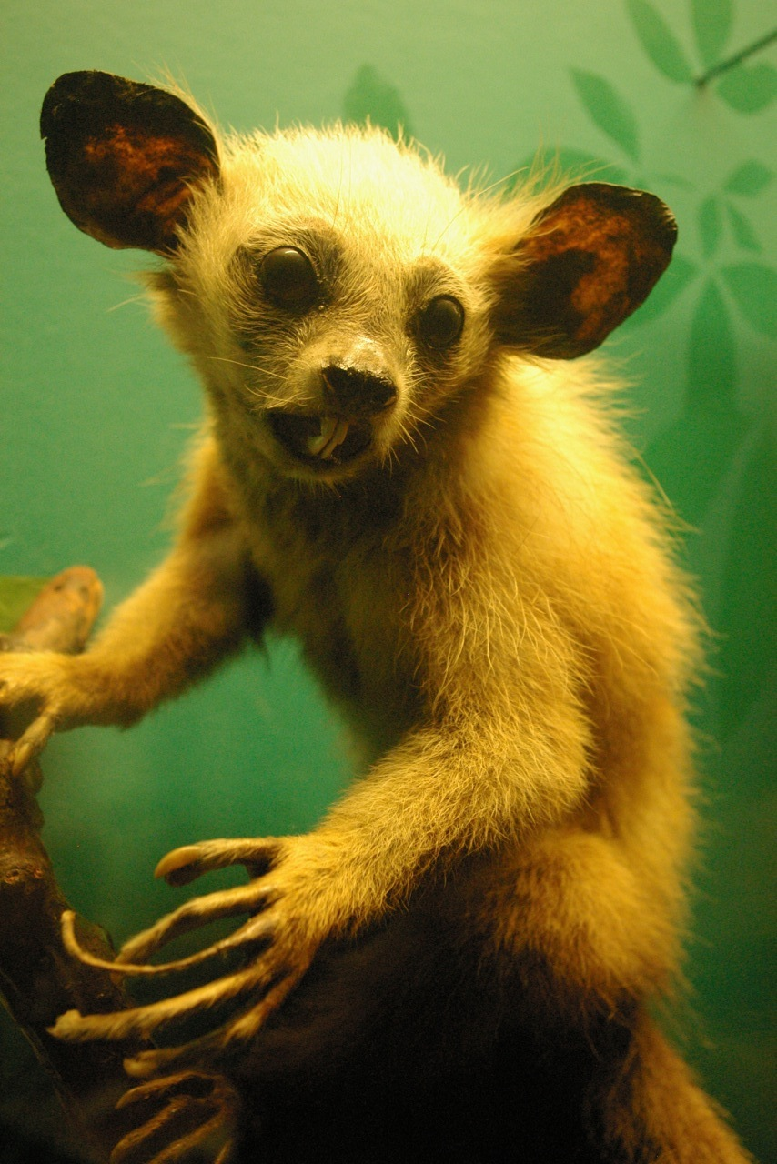 The 20 Ugliest Animals On Earth