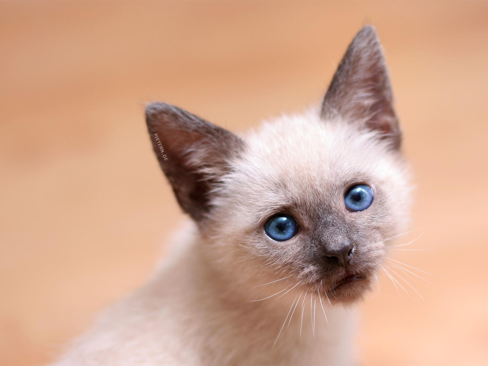 20 So Adorable Kittens Photographs | oneclickwonders