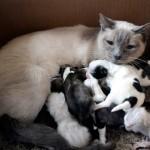 Meet the Unusual Animal Mommies