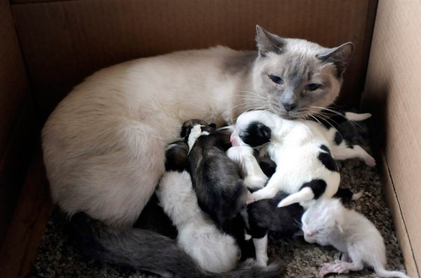 A cat with no dog issues Animal Mommies