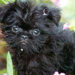 Top 20 Most Famous Dog Breeds