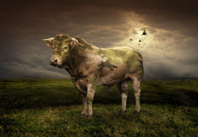 Pfizer Wallpapers: 20 Awesome Animal Photo Manipulations