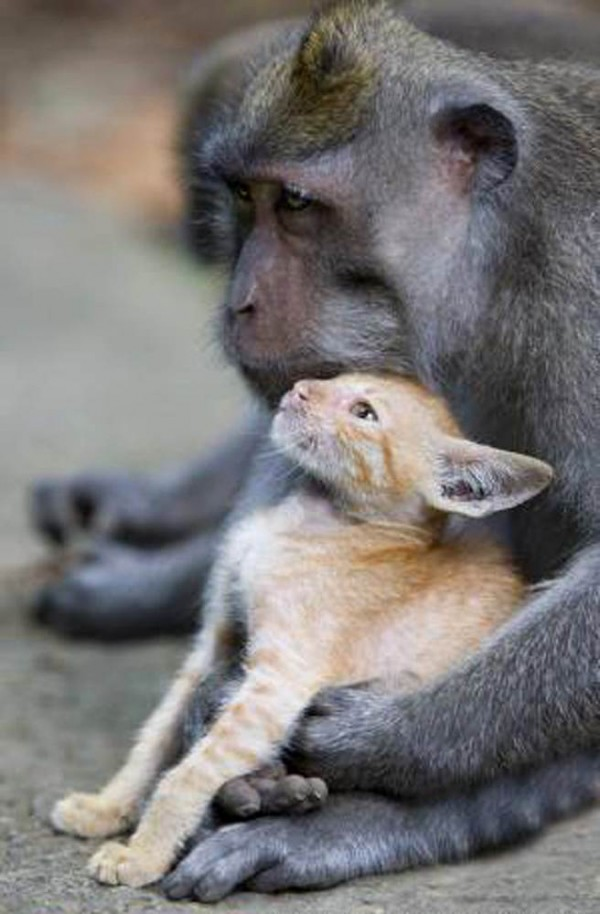 Dads, this one's for you - Animal Mommies