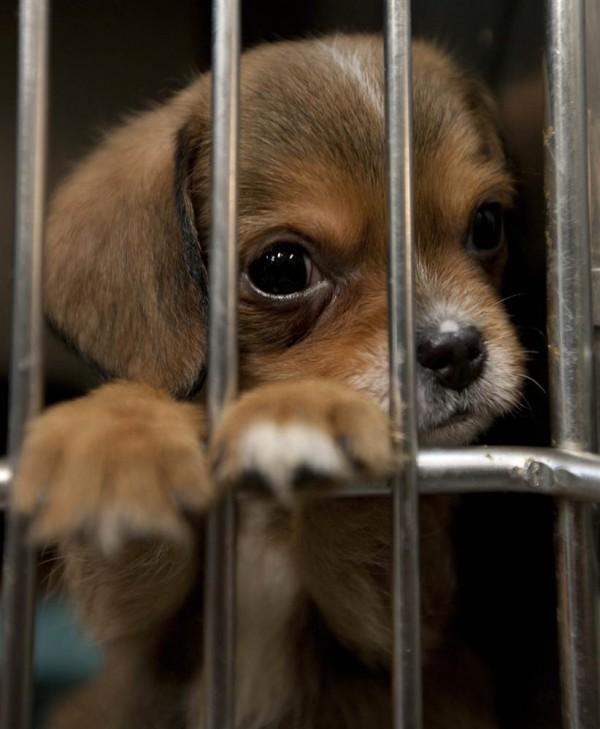 Pensive puppy