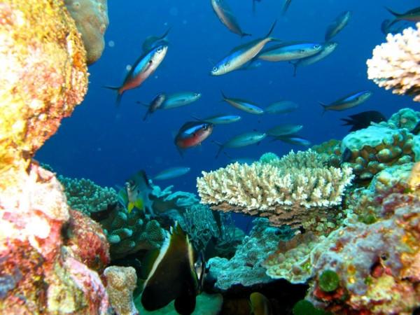 Wakatobi Archipelago, Indonesia