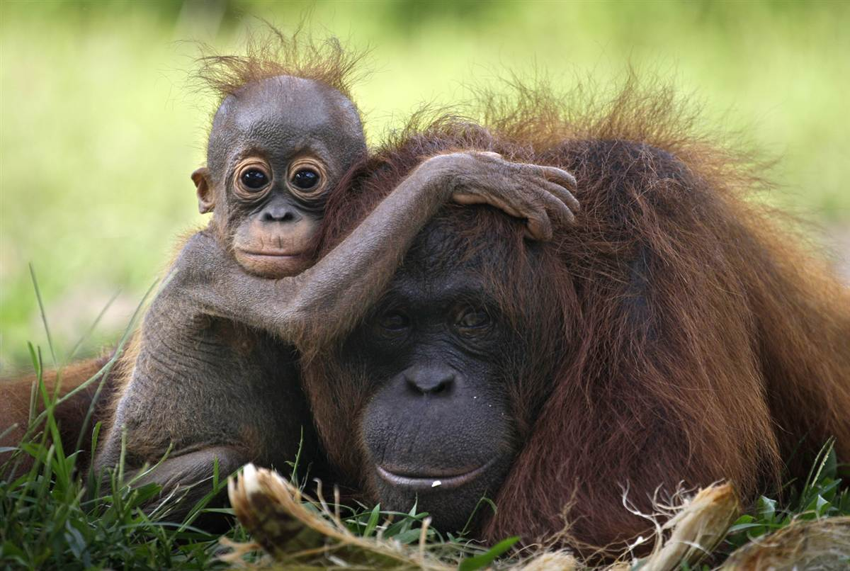 Cute Animals Pics Aw Inspiring Pictures Of Cute Animals - 30 animals cutest parents
