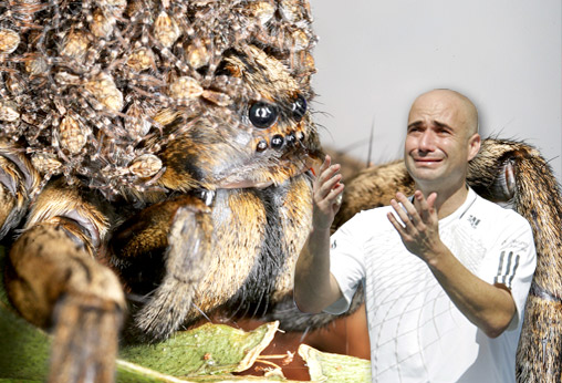 Andre Agassi is scared of spiders.
