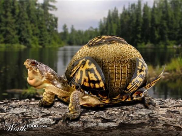Chubby Turtle