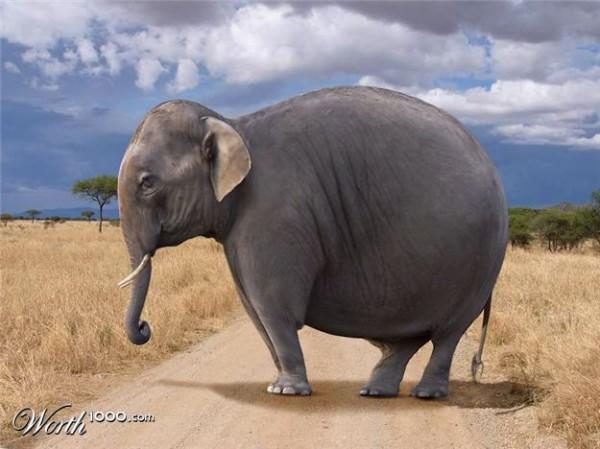 Elephat