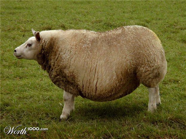 24 hilarious animal obesity