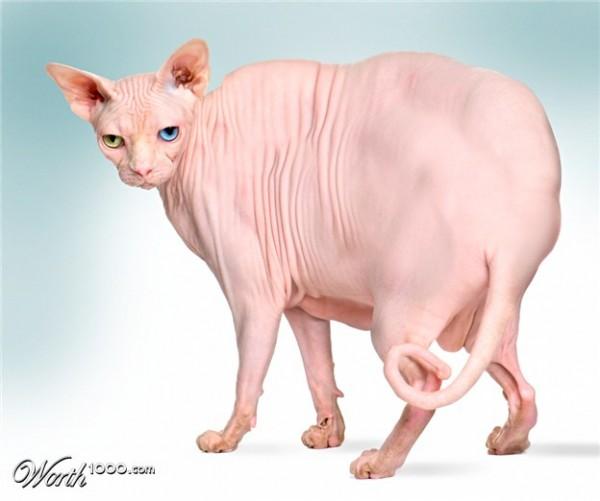 FattyCat
