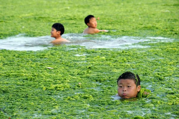 Green Algae Chokes Beach-