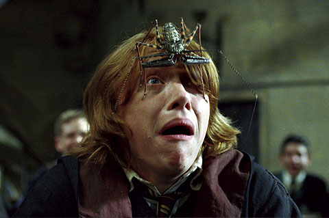 Harry Potter star Rupert Grint has a huge fear of spiders (arachnophobia).