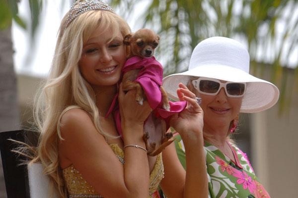 Paris Hilton - Tinkerbell