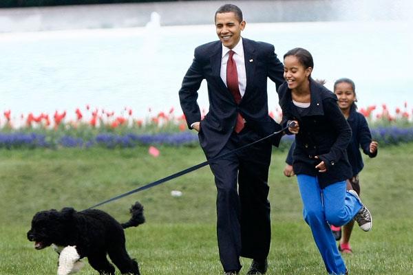 The Obamas - Bo