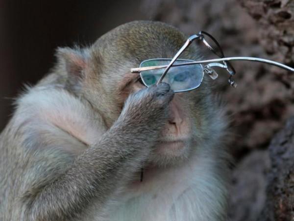 Moinmkey is Using Glasses