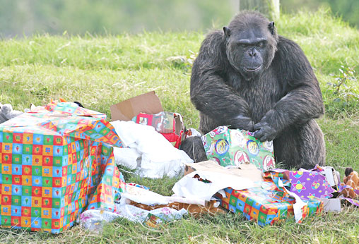 Monkey is collecing gifts