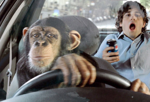 Monkey is driving the car