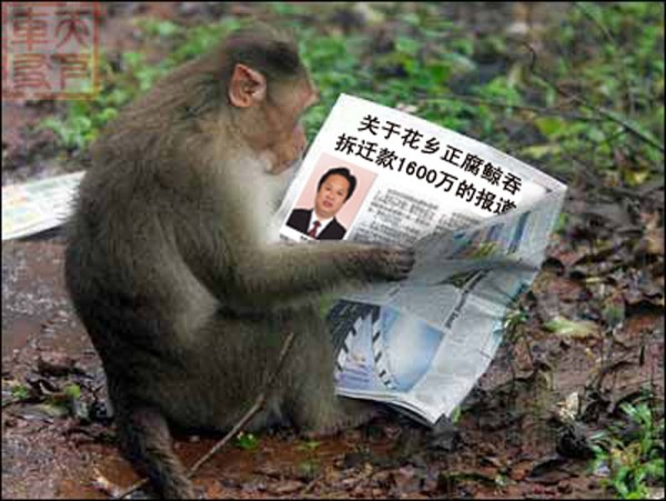 Monkey is reading a news paper