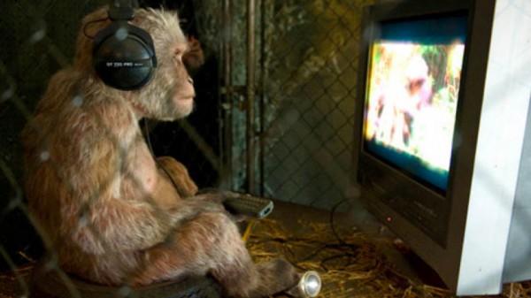 Monkey with T.V