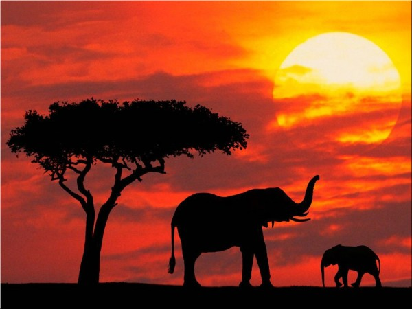 Beautiful Photograhy of Elephant at evening