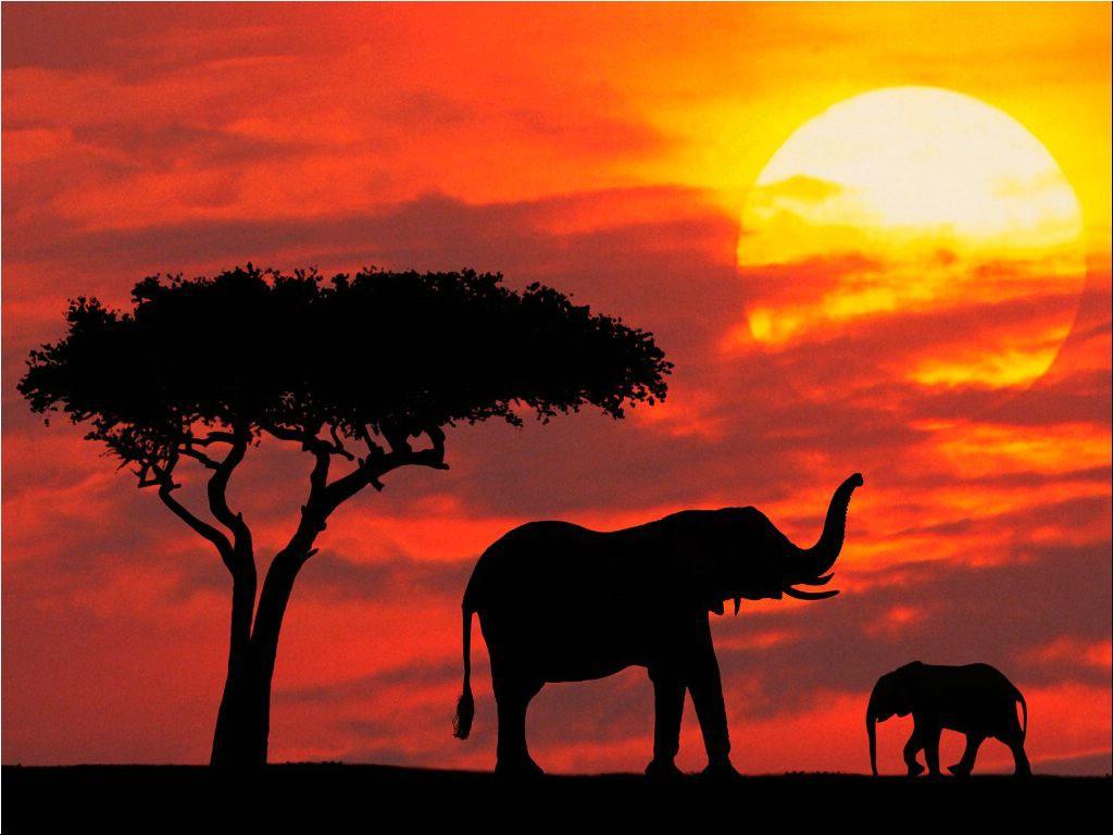Beautiful Photograhy of Elephant at evening