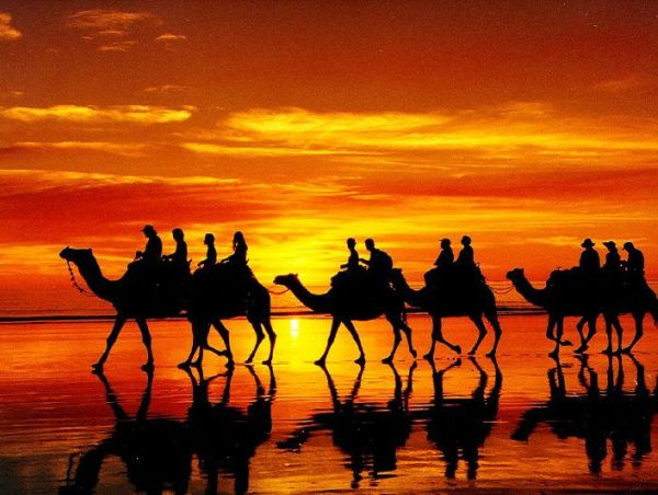 Eye Catching silhouette Camel Photography