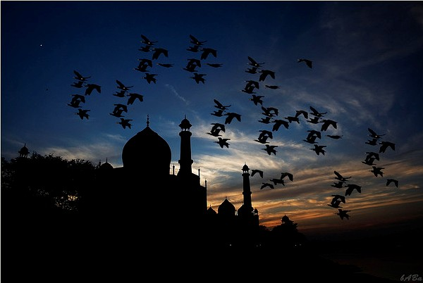 Wonderful silhouette  photography of birds