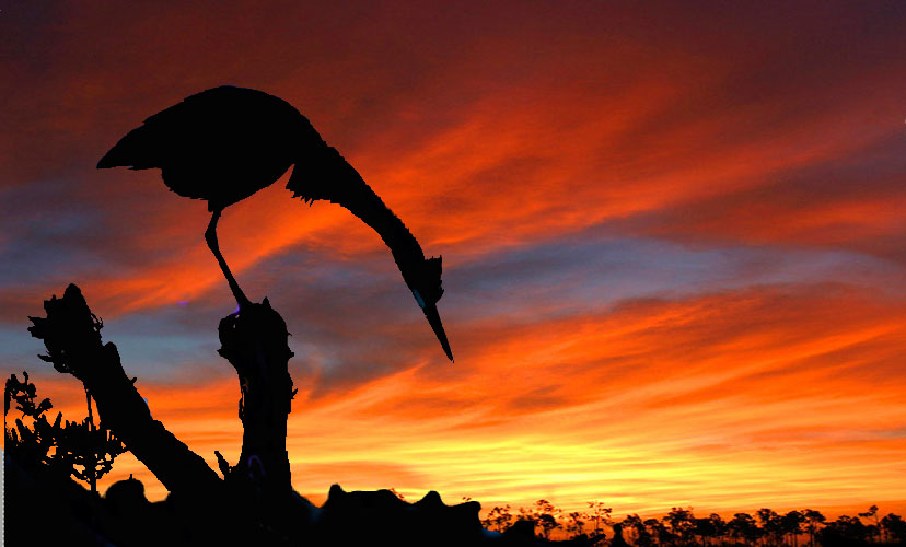 silhouette photography of bird