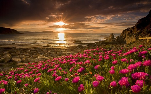 Sunset in Spring along with flowers on earth
