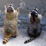 30 Cutest Examples of Animal Praying