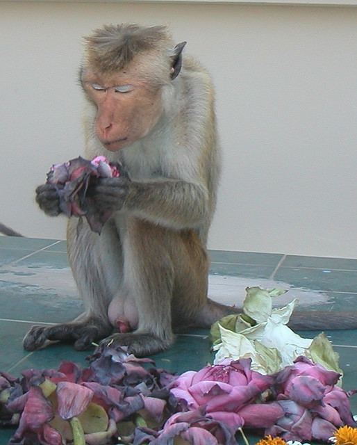 Monkey Prayer