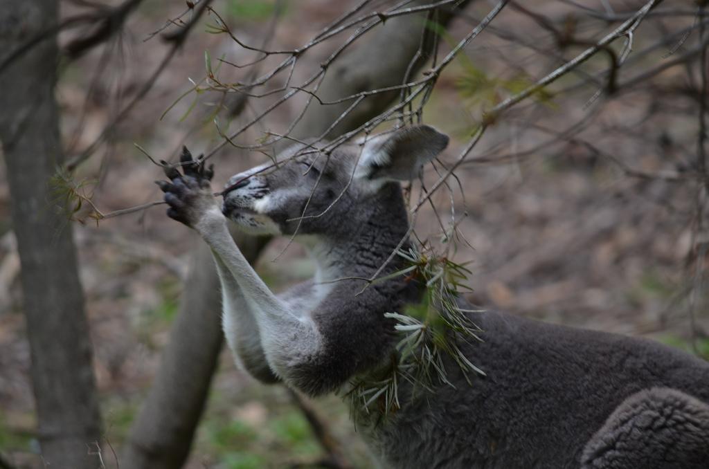 Animal Praying Images