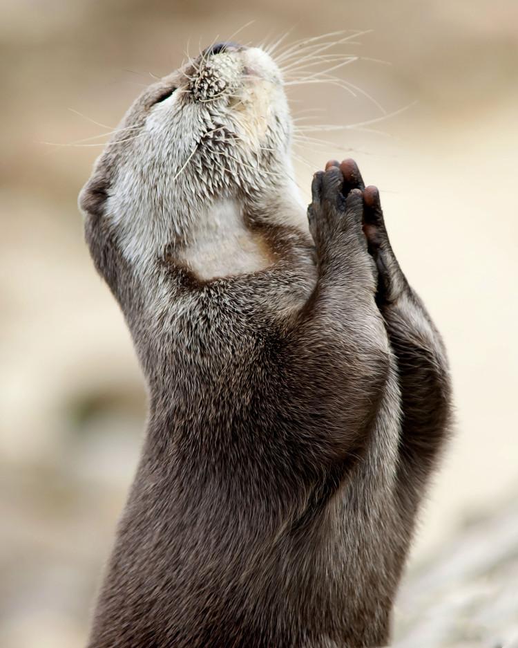 Pray Animals